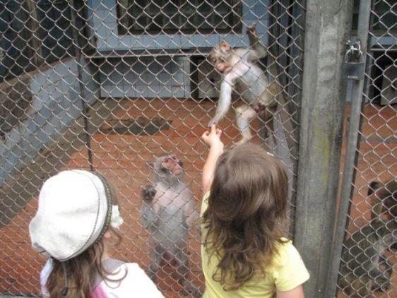 В обезьянньем питомнике вашим детям обязательно понравится