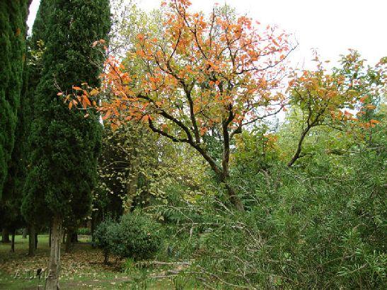 Все отчетливей признаки осени видны и в местных парках