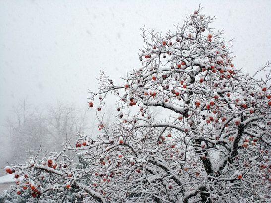 Новый год в Абхазии - это не только мандарины!
