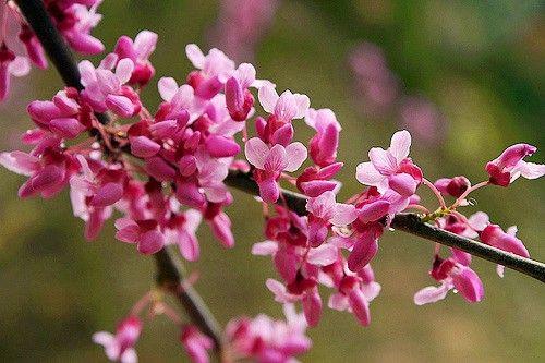 Сама природа украшает Сочинский дендрарий в марте