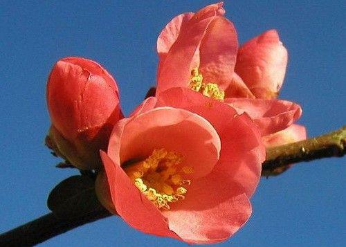 В апреле в Сочи все цветет и пахнет